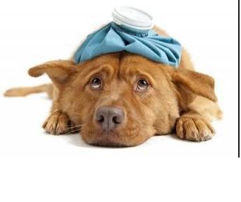 Urgencias veterinarias: Servicios de Guau Veterinaris
