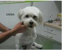 Visita a domicilio veterinarias: Servicios de Guau Veterinaris