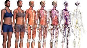DIAGNOSTICO: TRATAMIENTOS de Centro de Osteopatía Maite González