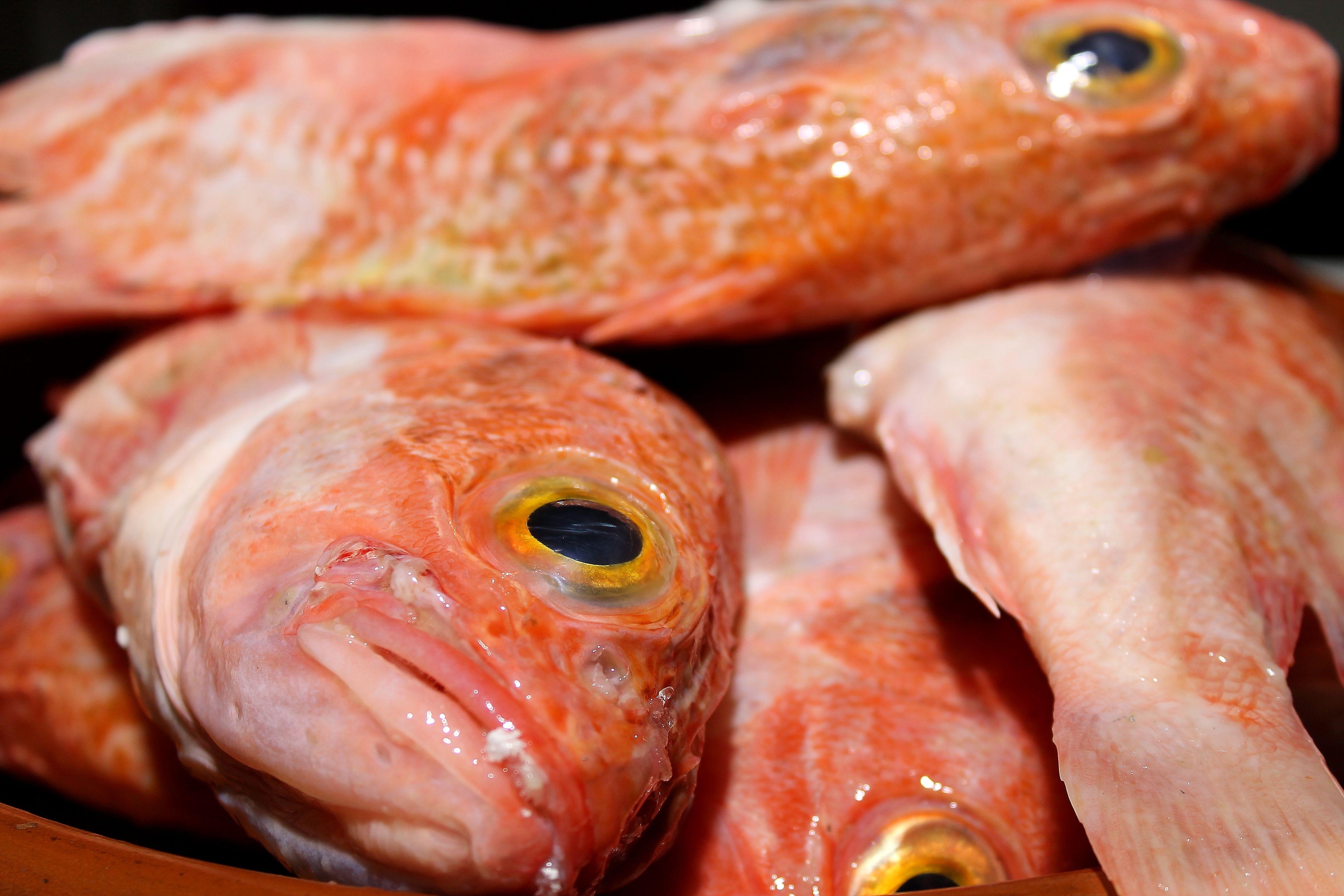 Restaurante con pescado fresco en Tetuán, Madrid