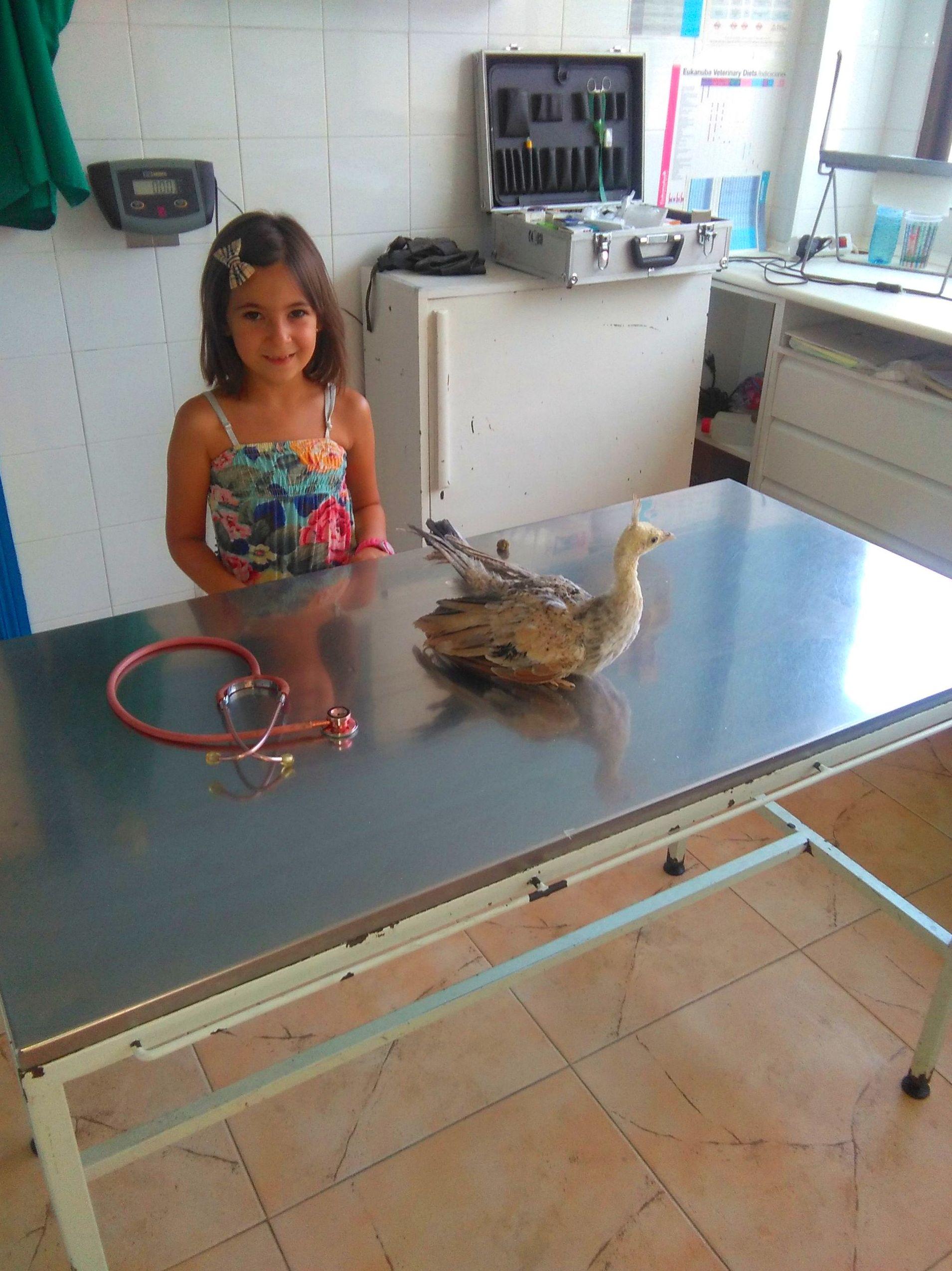 Foto 4 de Veterinarios   en La Adrada | Clínica Veterinaria La Adrada