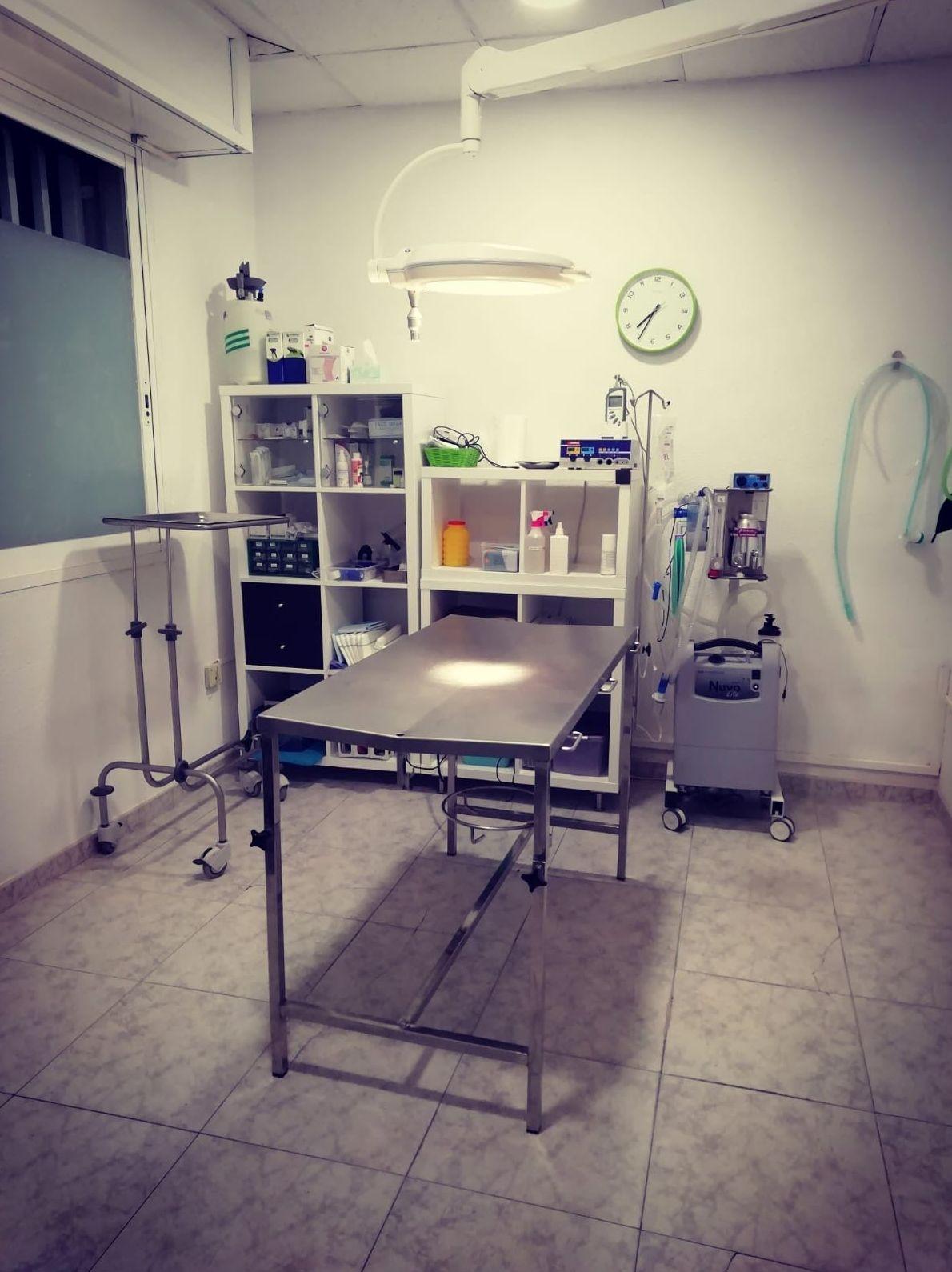 Cirugía General: Servicios de Les Fonts Veterinaria
