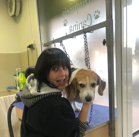 Peluqueria canina y felina: Servicios de Les Fonts Veterinaria