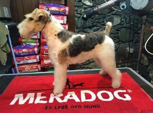 Foto 11 de Tiendas de animales en Arucas | Casa Clemente