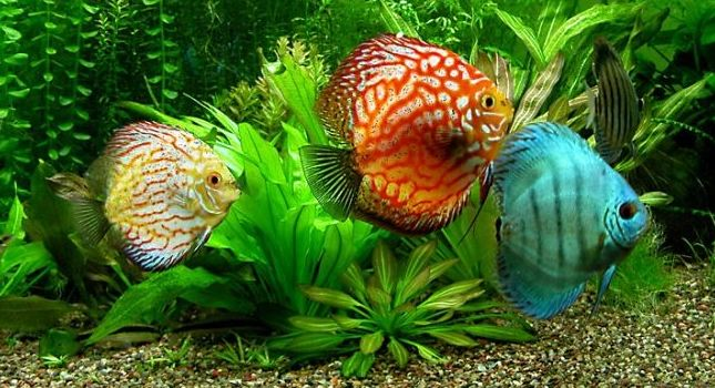 Productos para peces