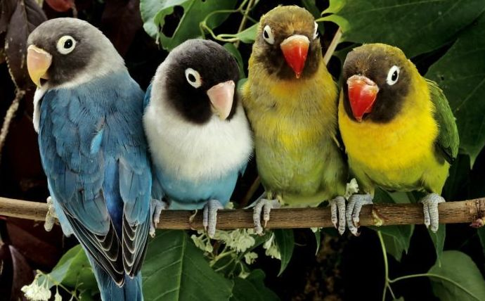 Productos para pájaros