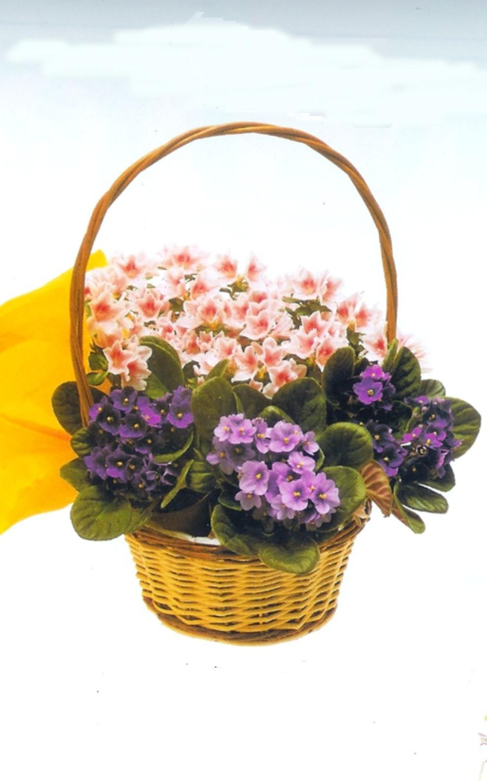 Envio de flores centro de Madrid