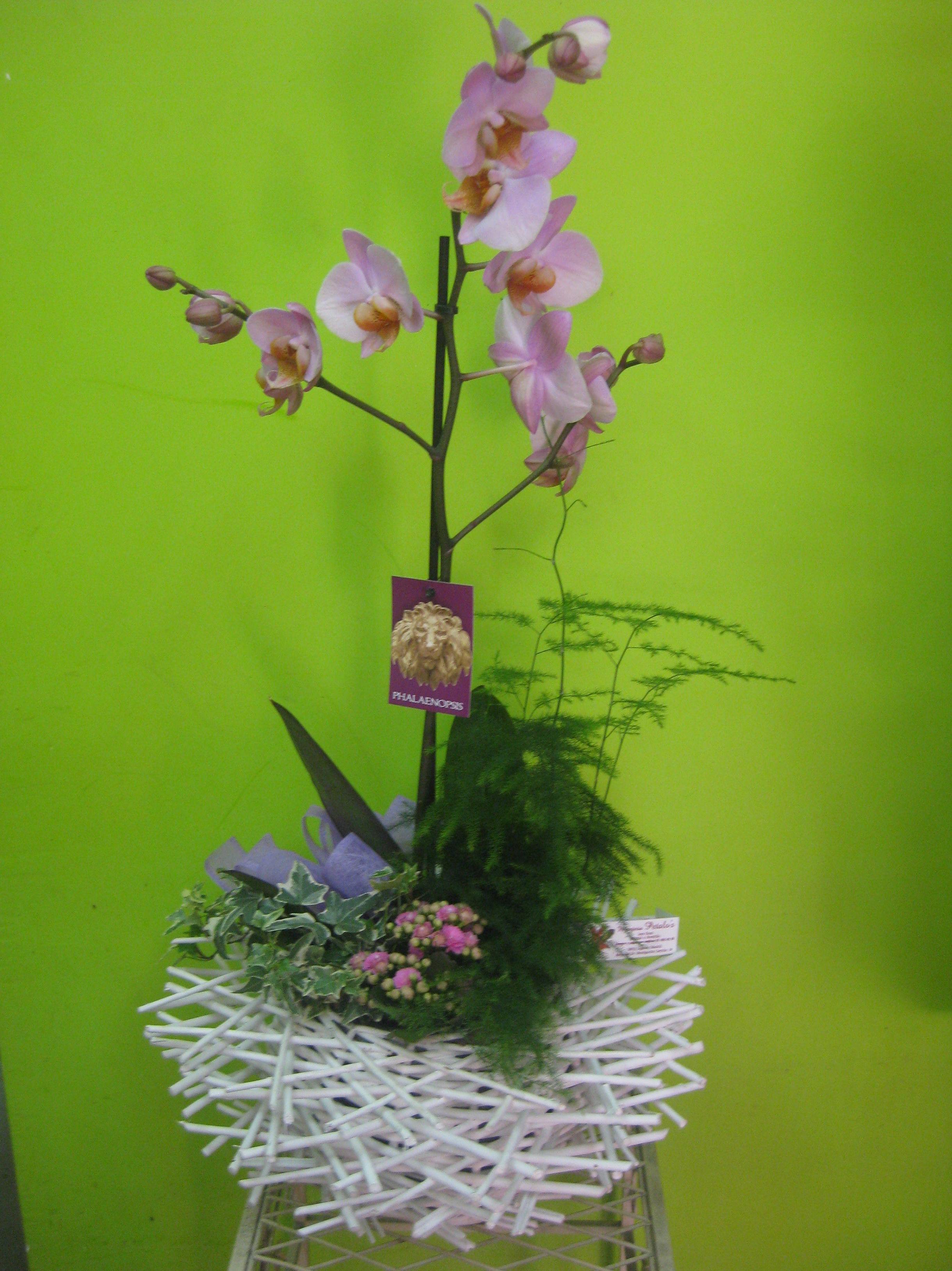 cesta orquidea