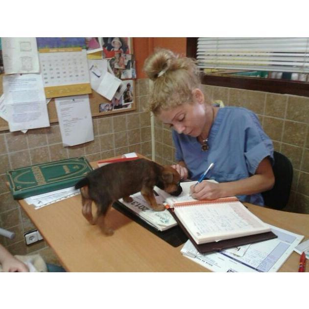 Medicina interna: Servicios y tratamientos de Centro Veterinario Ifach