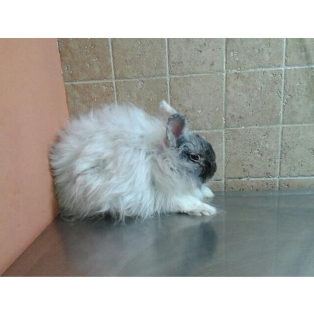 Exóticos y pequeños animales: Servicios y tratamientos de Centro Veterinario Ifach
