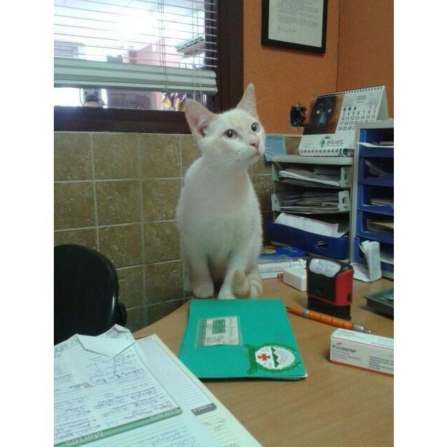 Desparasitación: Servicios y tratamientos de Centro Veterinario Ifach