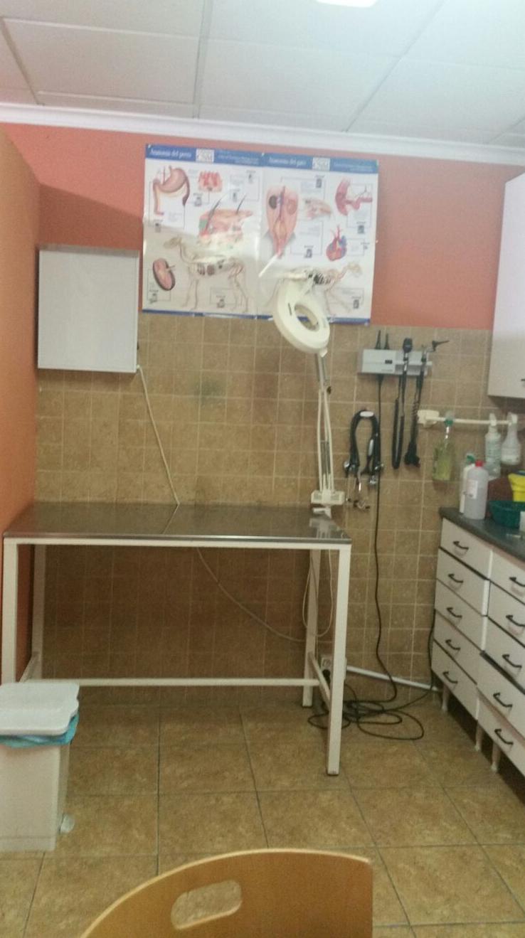 Consultas veterinarias en Alicante