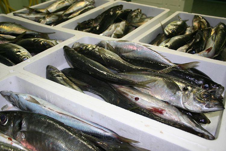 Compra en lonja de pescado en A Coruña