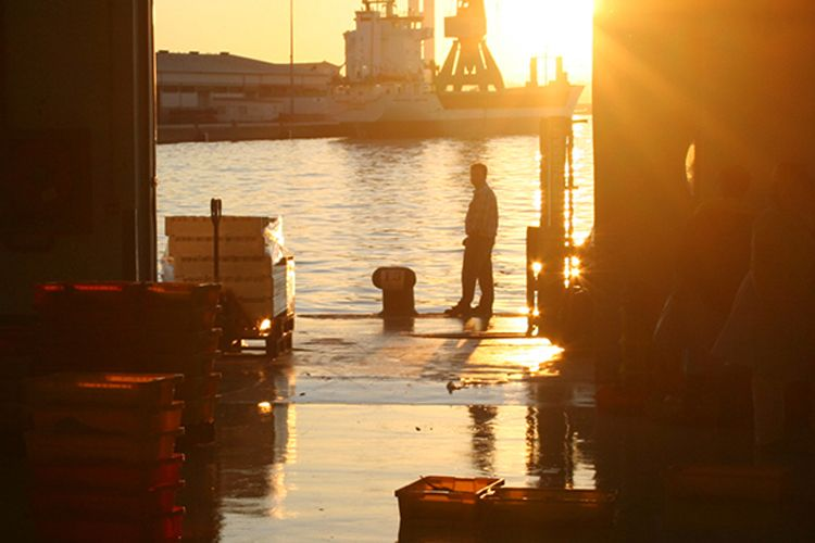 Proveedores de pescados y mariscos en A Coruña