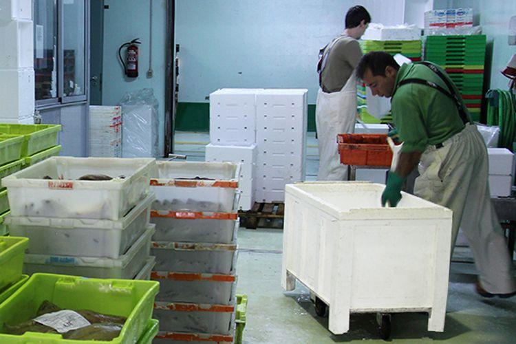 Mayorista de pescados en Pontevedra