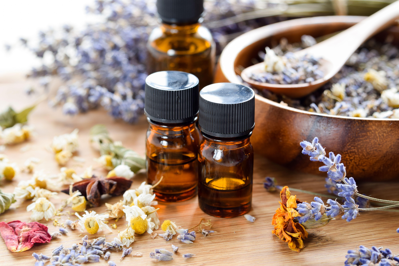 Plantas medicinales en Terrassa
