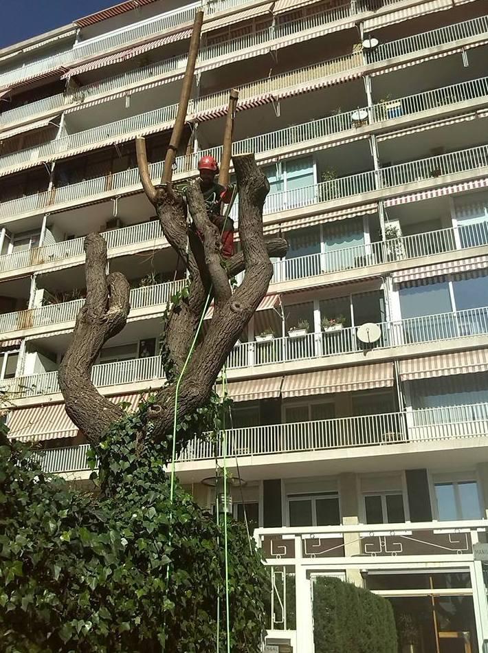 Tala controlada de árboles