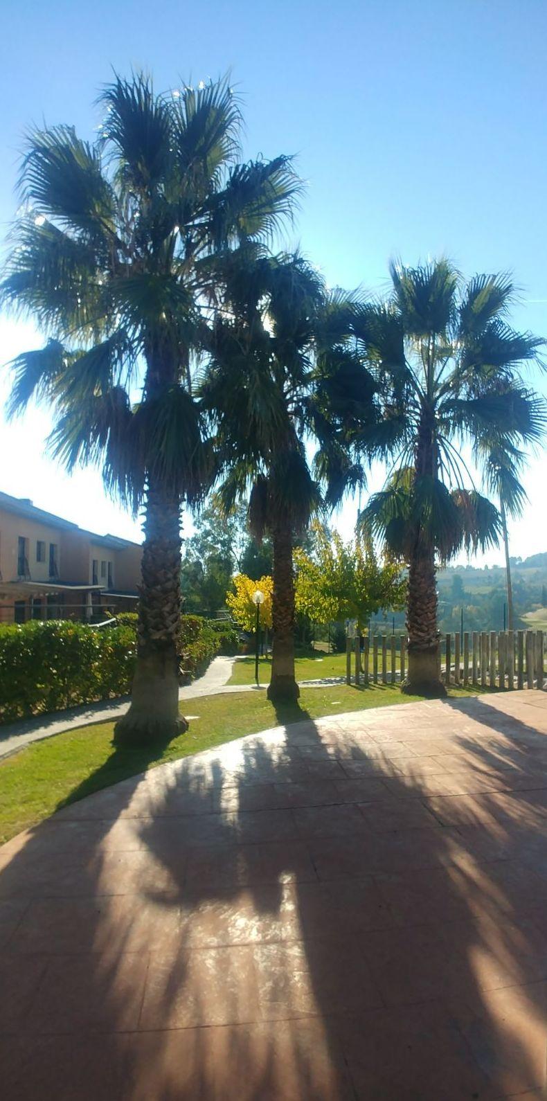 Foto 1 de Diseño y mantenimiento de jardines en Masquefa | Jardinería Moreno