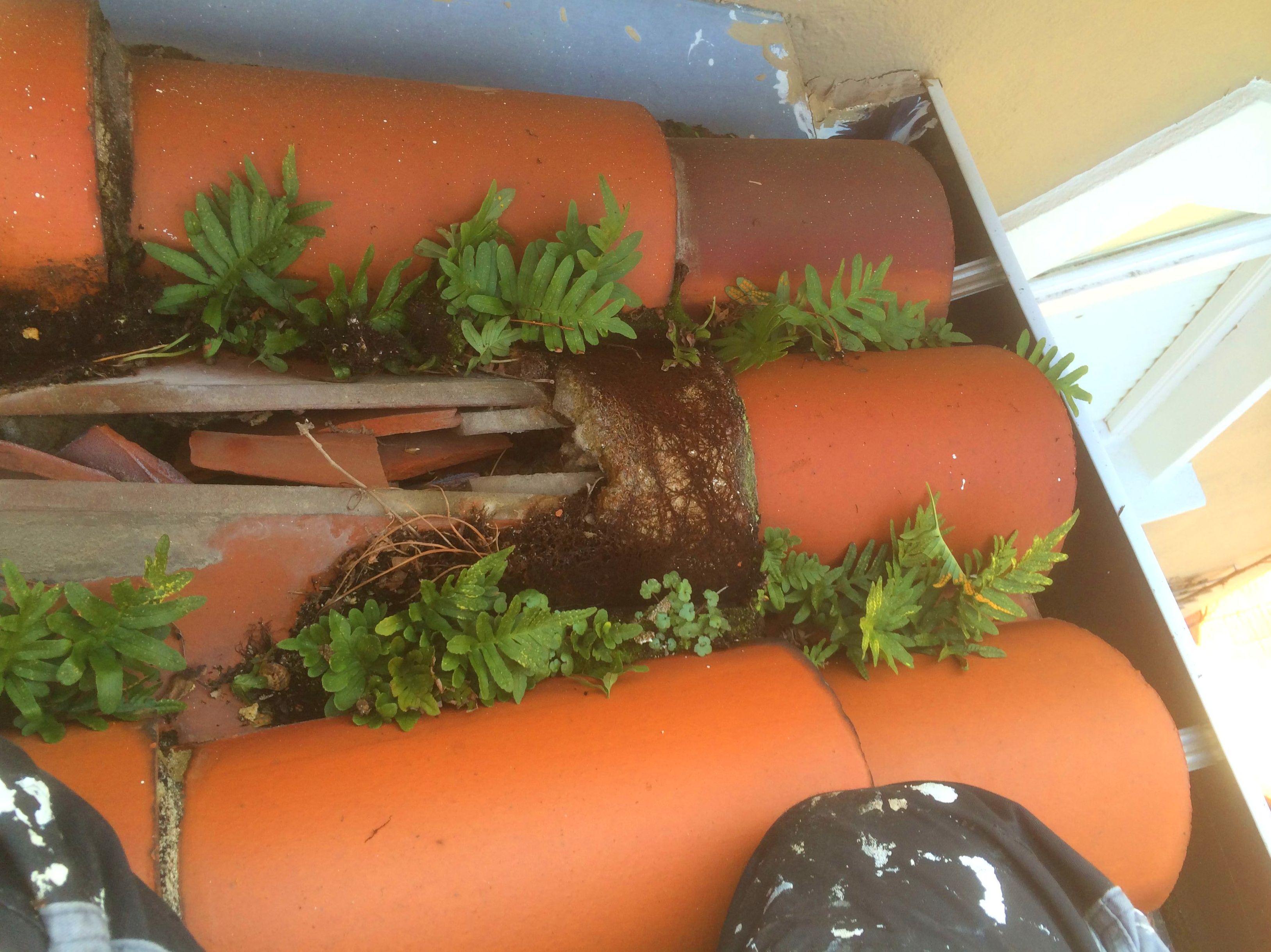 MANTENIMIENTO DE TEJADOS Y CUBIERTAS EN SANTANDER-TORRELAVEGA.  Los canalones o pesebrones de agua son los conductos que llevan el agua de lluvia de forma horizontal por el tejado. Debido a su posición reciben mucha basura que pueden atascar los canalones