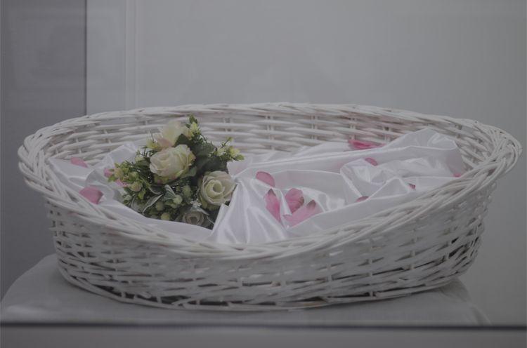 Crematorio de animales en Alzira, Valencia