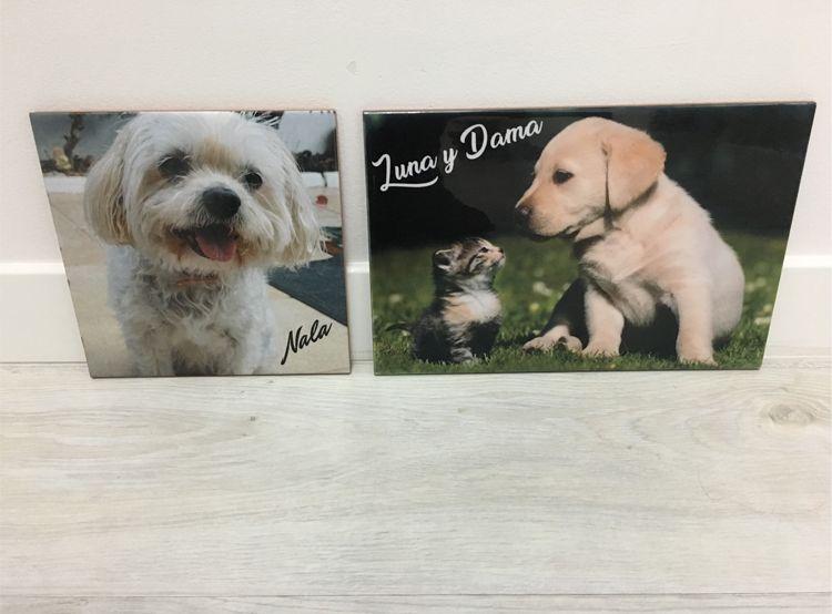 Azulejos personalizados de perros en Alzira, Valencia