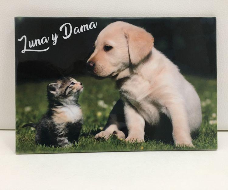 Azulejos personalizados de animales de compañía en Alzira, Valencia