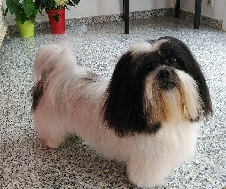 Un cliente satisfecho en nuestra peluquería canina