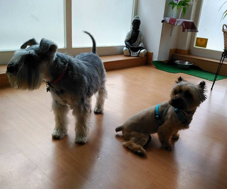 Nuestros clientes en la peluquería canina