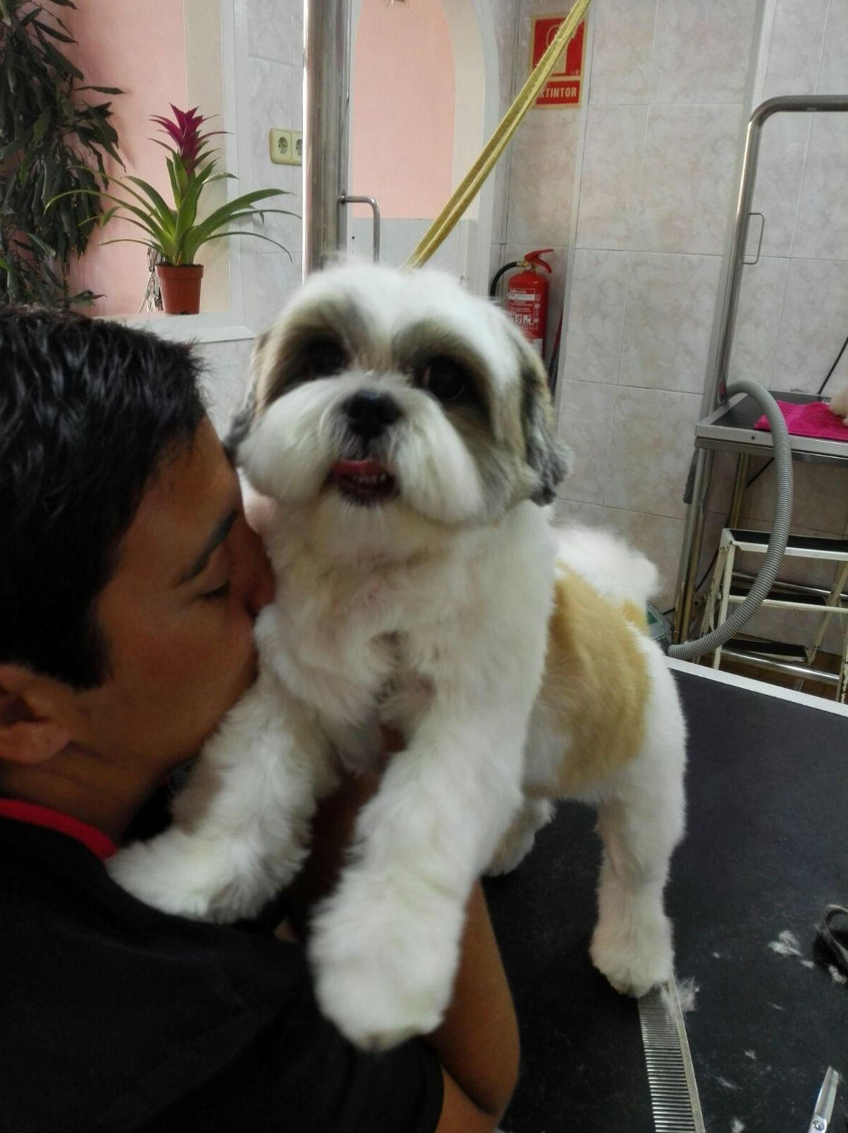 Terapias naturales para perros en Mataró
