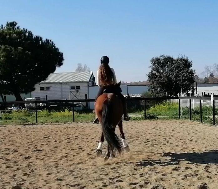 Foto 10 de Hípica y equitación en    Fran Arenas Doma Clásica