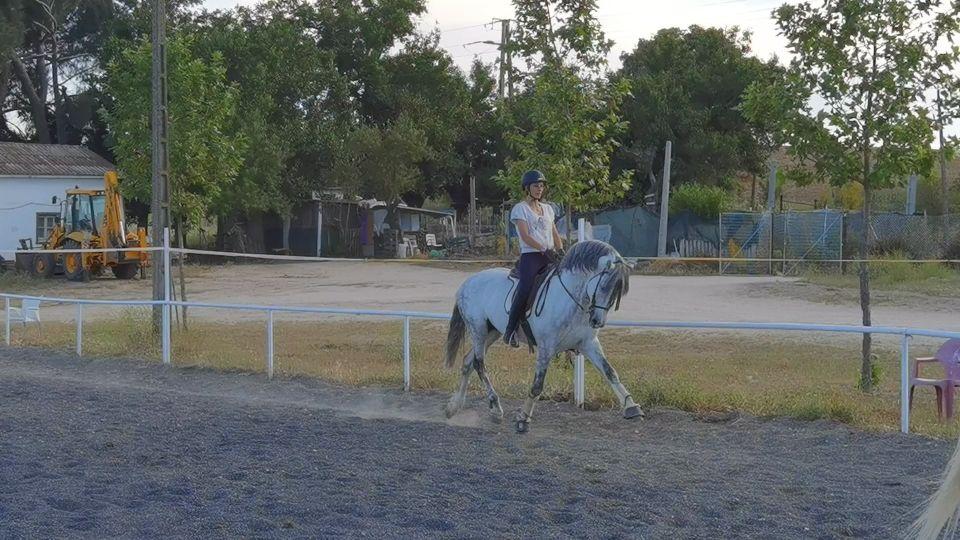 Clases de equitación en Móstoles