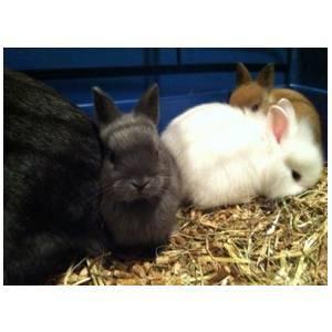 Conejos: Productos y Servicios de Zoolife Mascotas Pets Place Hortaleza