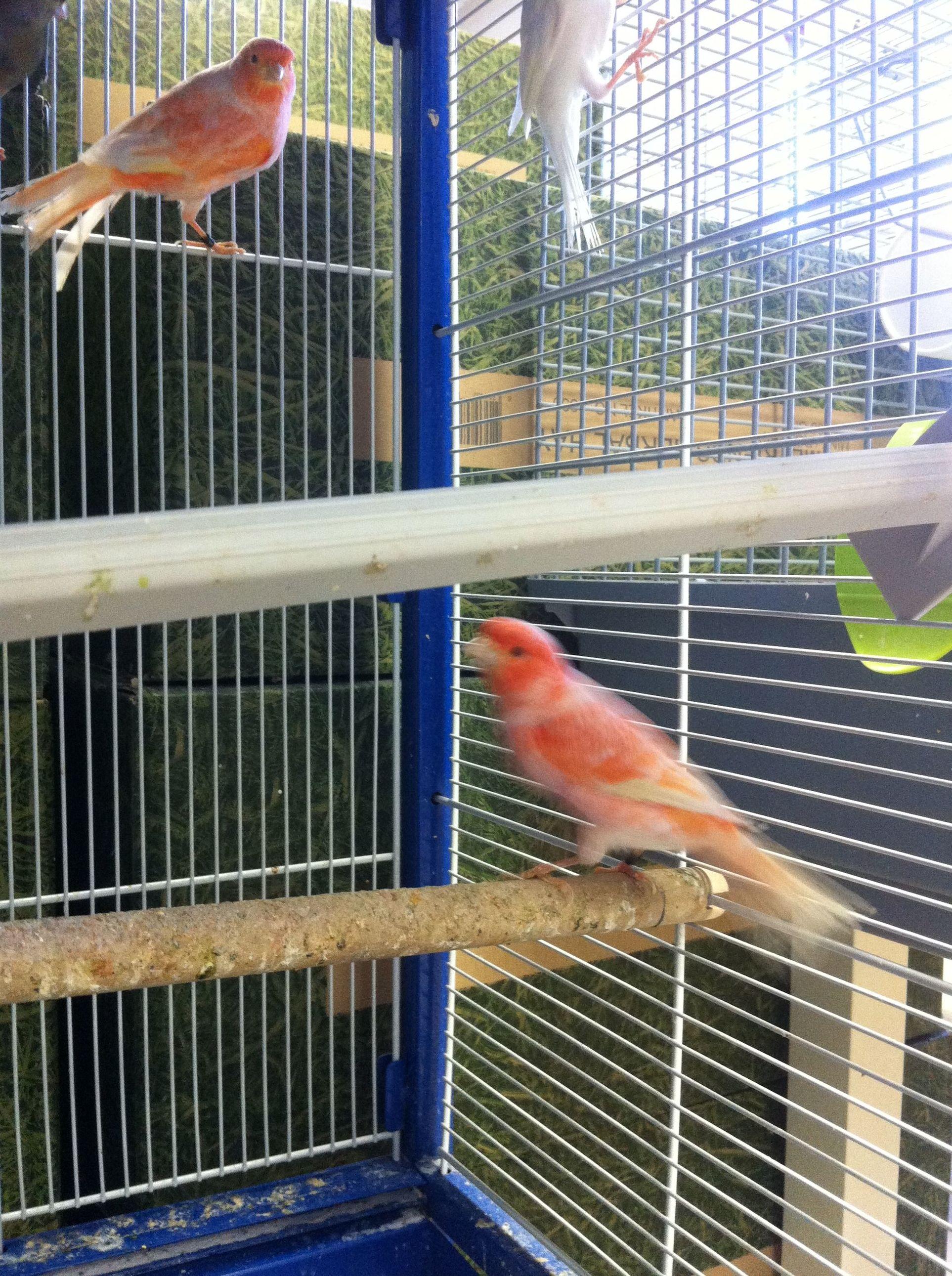 Foto 8 de Tiendas de animales en Madrid | Zoolife Mascotas Pets Place Hortaleza