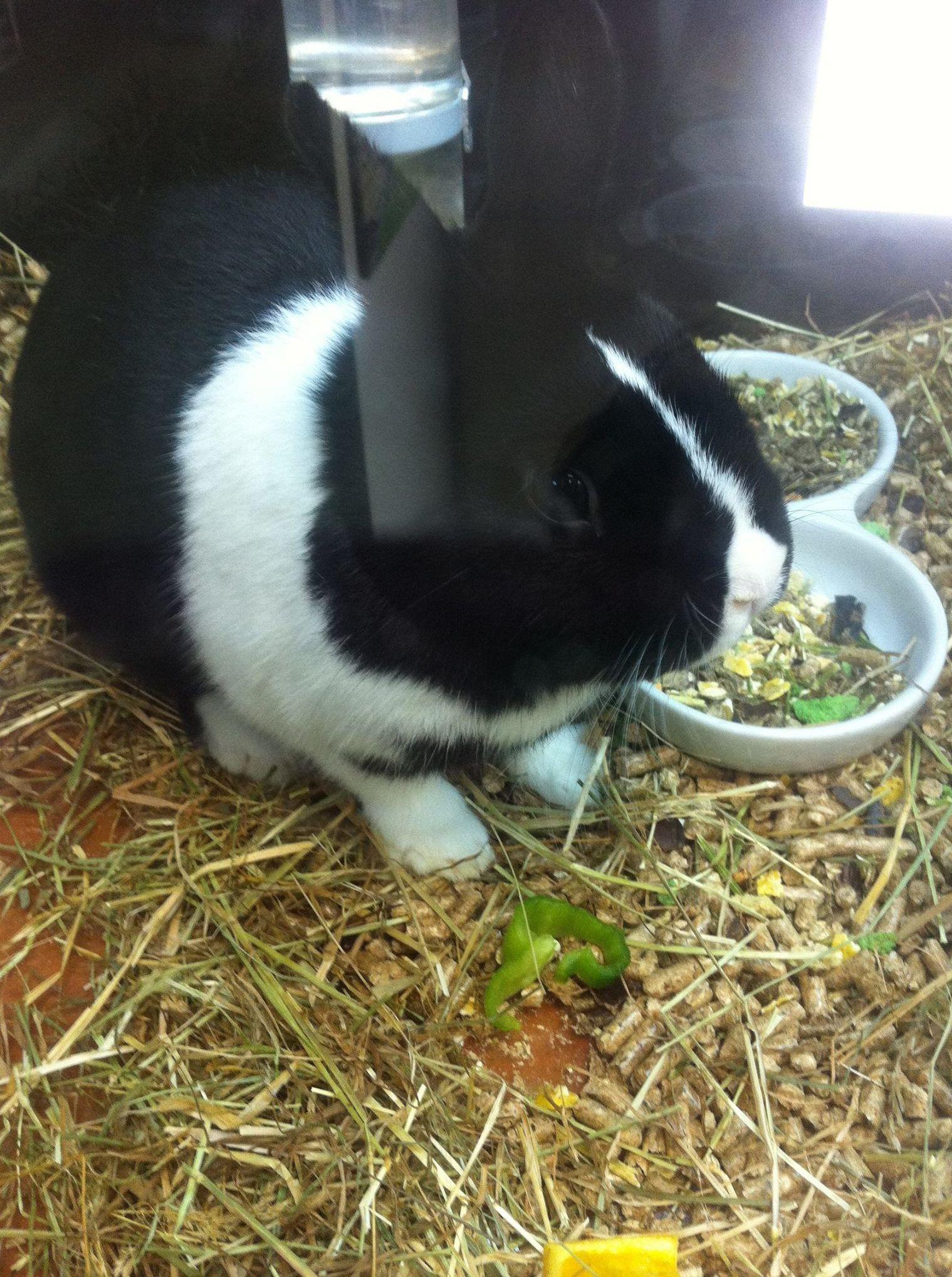 Foto 10 de Tiendas de animales en  | Zoolife - Clínica Veterinaria