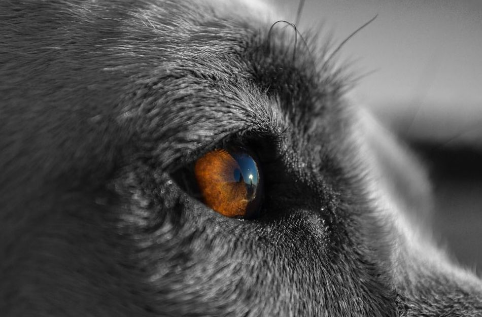 veterinario oftalmólogo Asturias