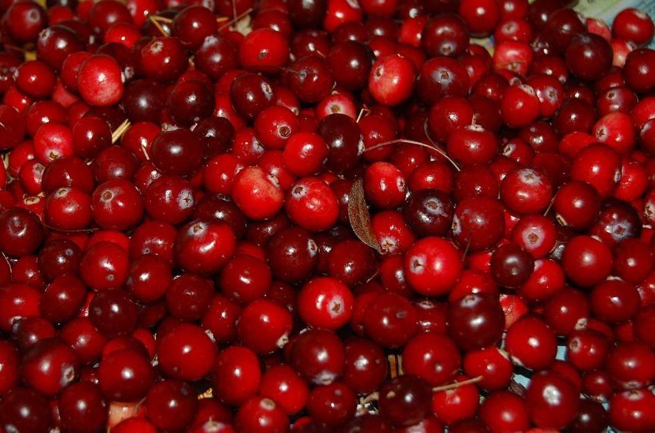 Arándano rojo: Cuidados naturales de Herbolario Melisa Alimentación Natural