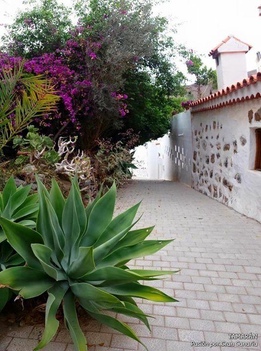 Otros servicios previo aviso: Servicios de Casa Elisa Canarias