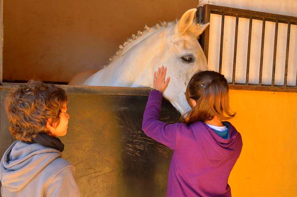 Aprendiendo a cuidar y respetar al caballo