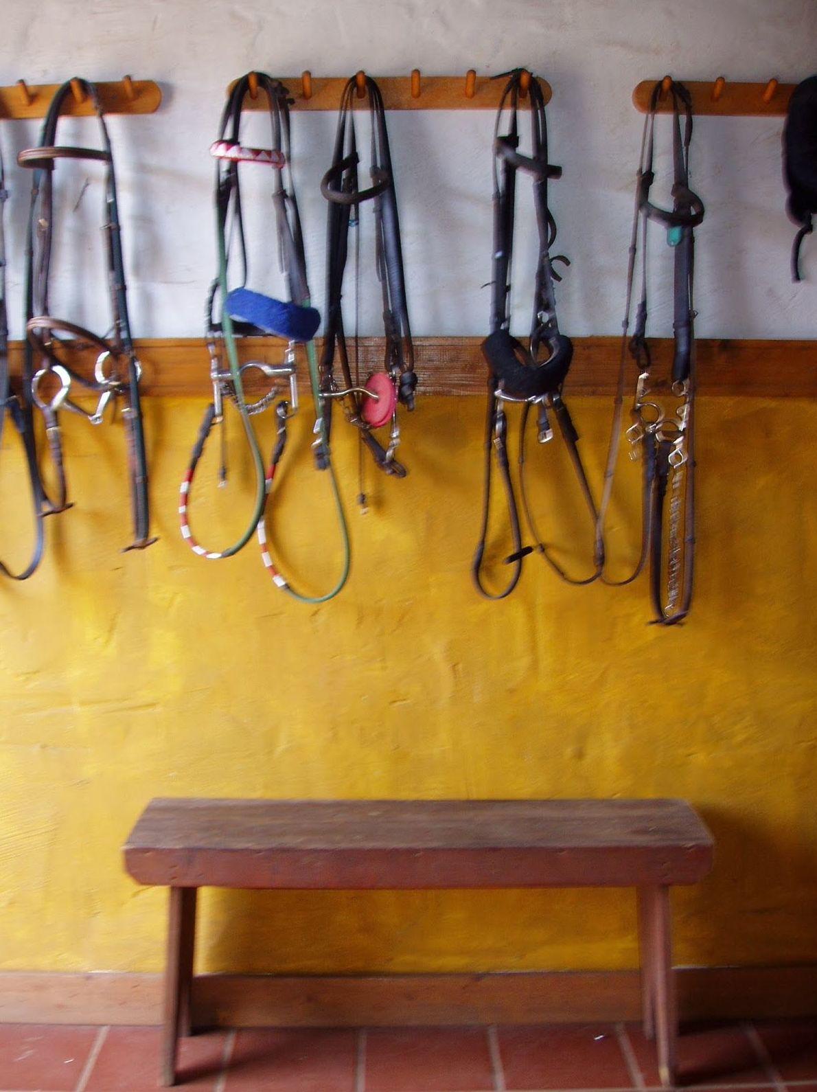Utensilios para la equitación