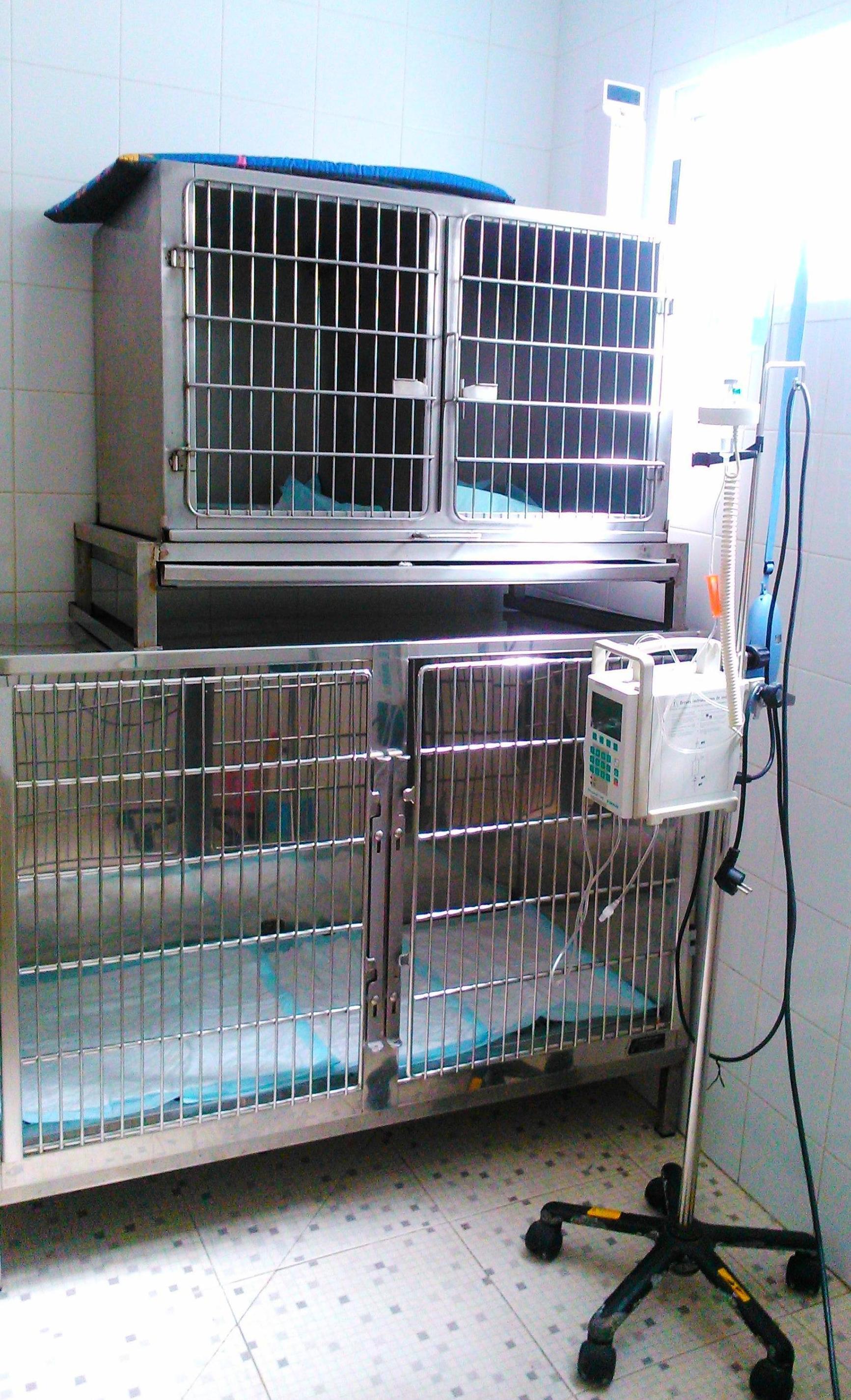 Servicio de hospitalización para mascotas en Almassora - Castellón