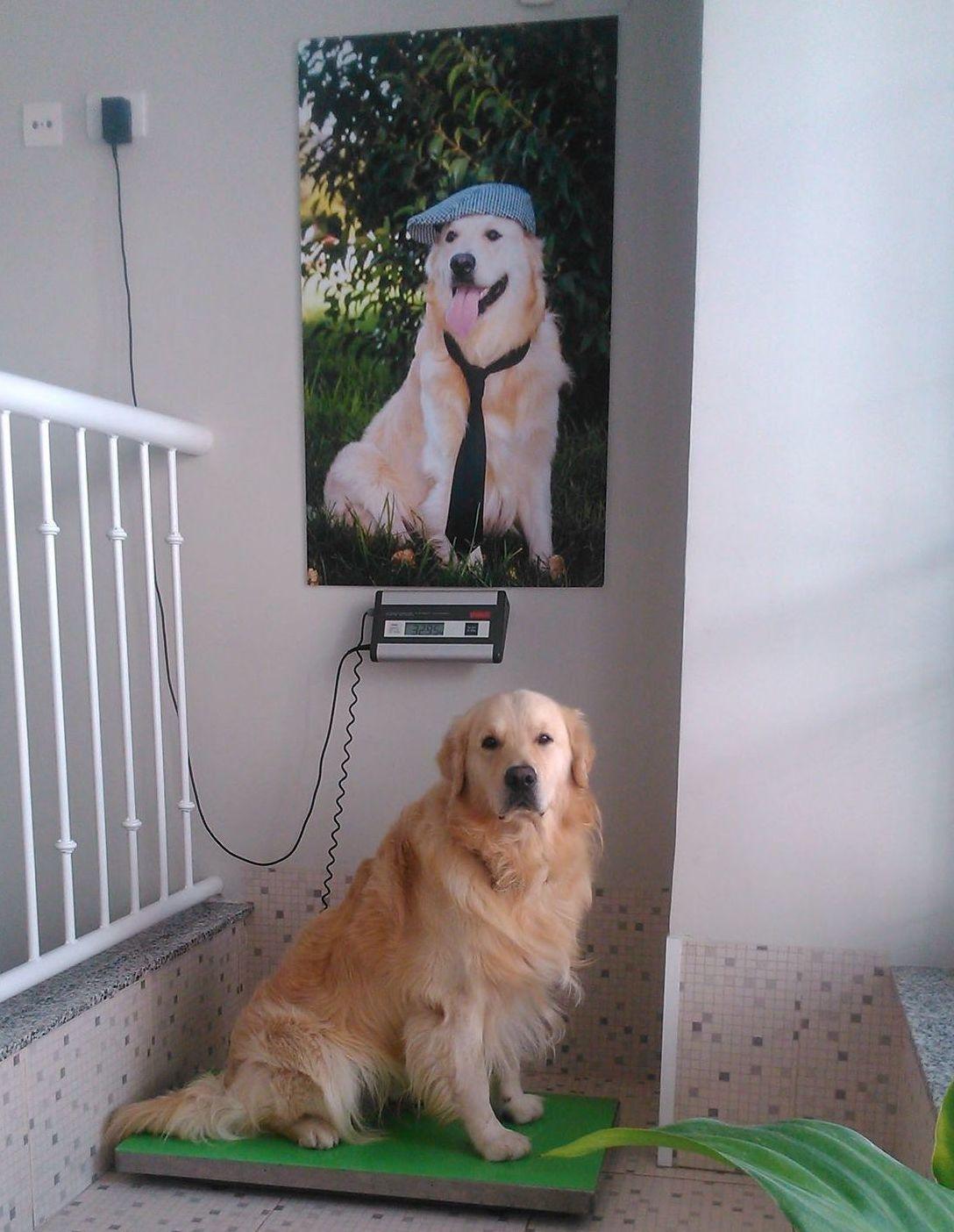 Nuestros paciente, clínica veterinaria en Almazora