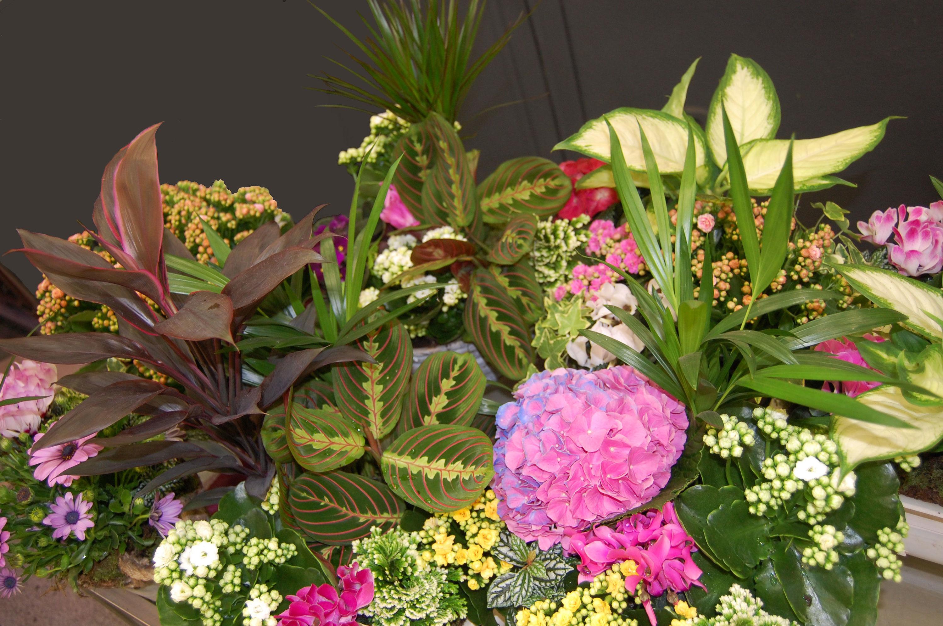 Gran variedad de plantas