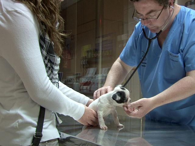 De la salud: Servicios de Clínica Veterinaria San Francisco