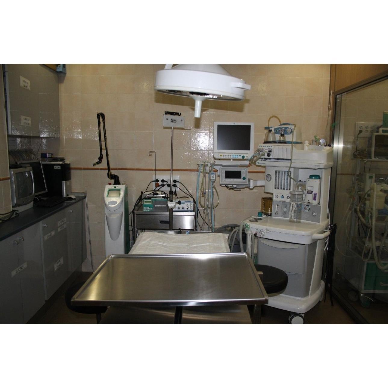 Cirugía: Servicios de Clínica Veterinaria San Francisco