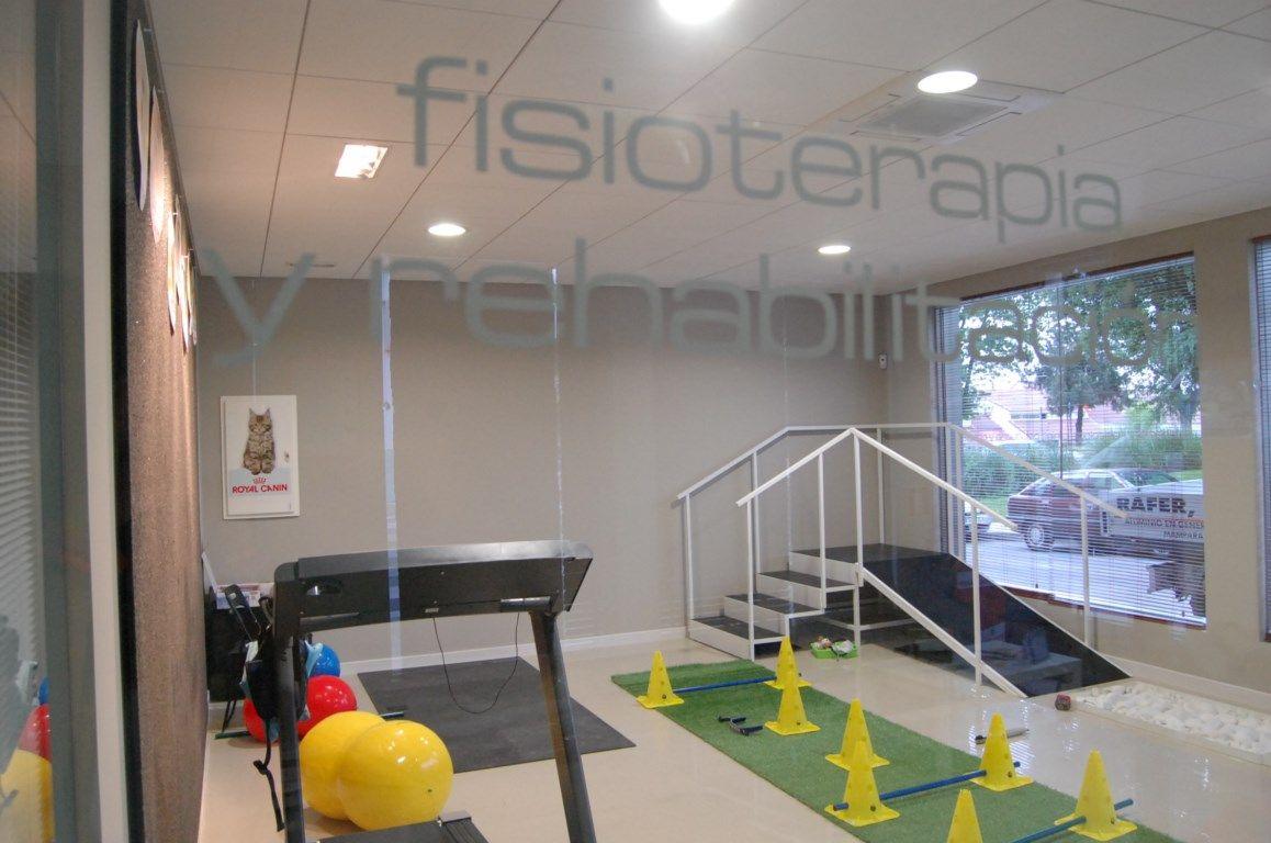 Fisioterapia y rehabilitación canina en Madrid