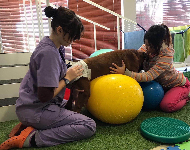 Centro pionero en fisioterapia canina
