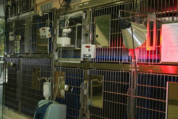 Foto 4 de Peluquerías caninas en Mollet del Vallès | Hospital Veteralia Movet 24 H