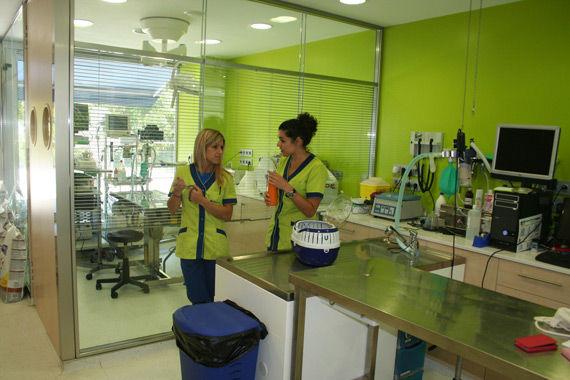 Foto 5 de Peluquerías caninas en Mollet del Vallès | Hospital Veteralia Movet 24 H