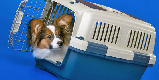 Atención veterinaria en Huelva
