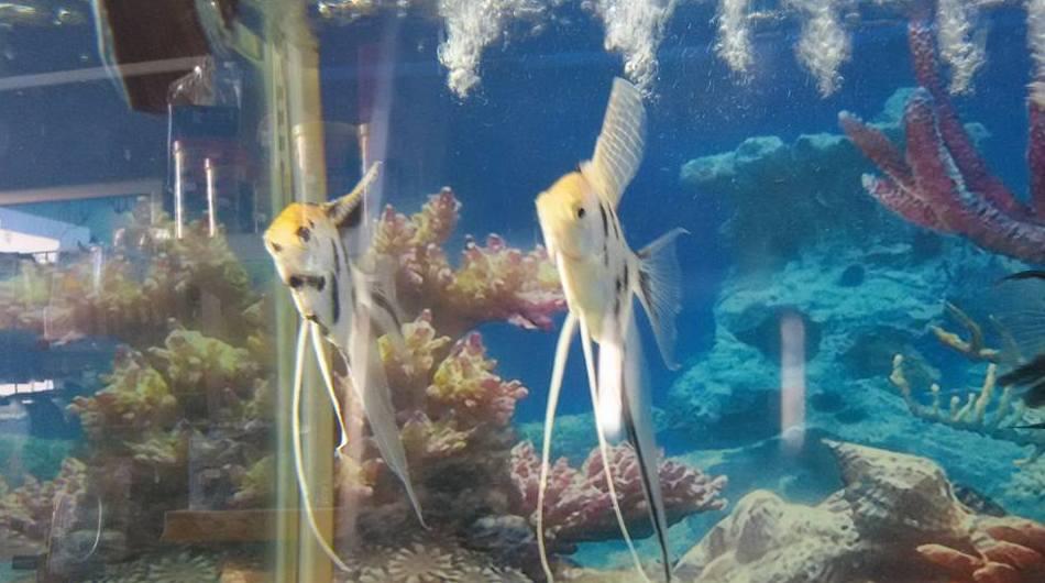 Venta de peces en Fuerteventura